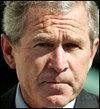 Bush_3